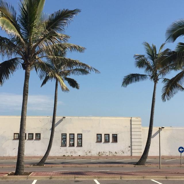 Durban Palm Trees